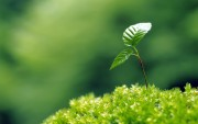 Green Plants Birth HD Wallpapers 8ec112108974928